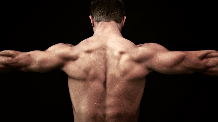 back workout muscles